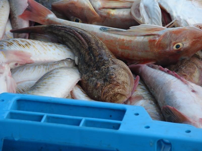 fresh fish in Calpe